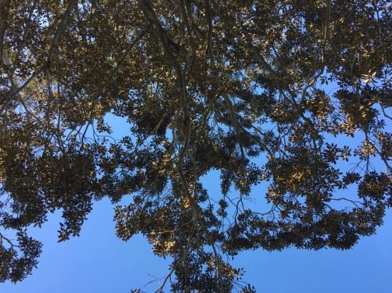 leaves MBF (2)
