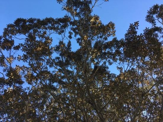 leaves MBF (3)