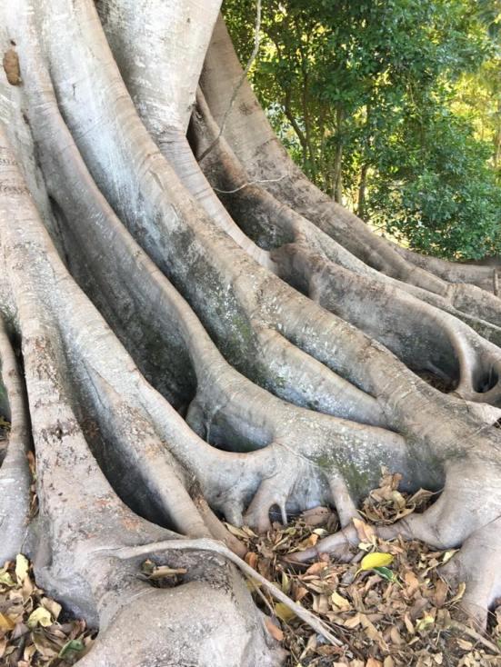 roots MBF