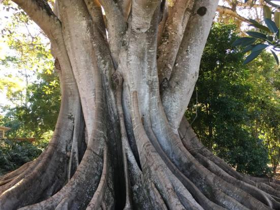 single trunk MBF